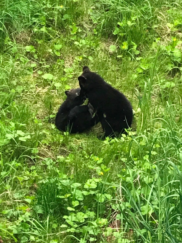 masked cubs 2017jun8